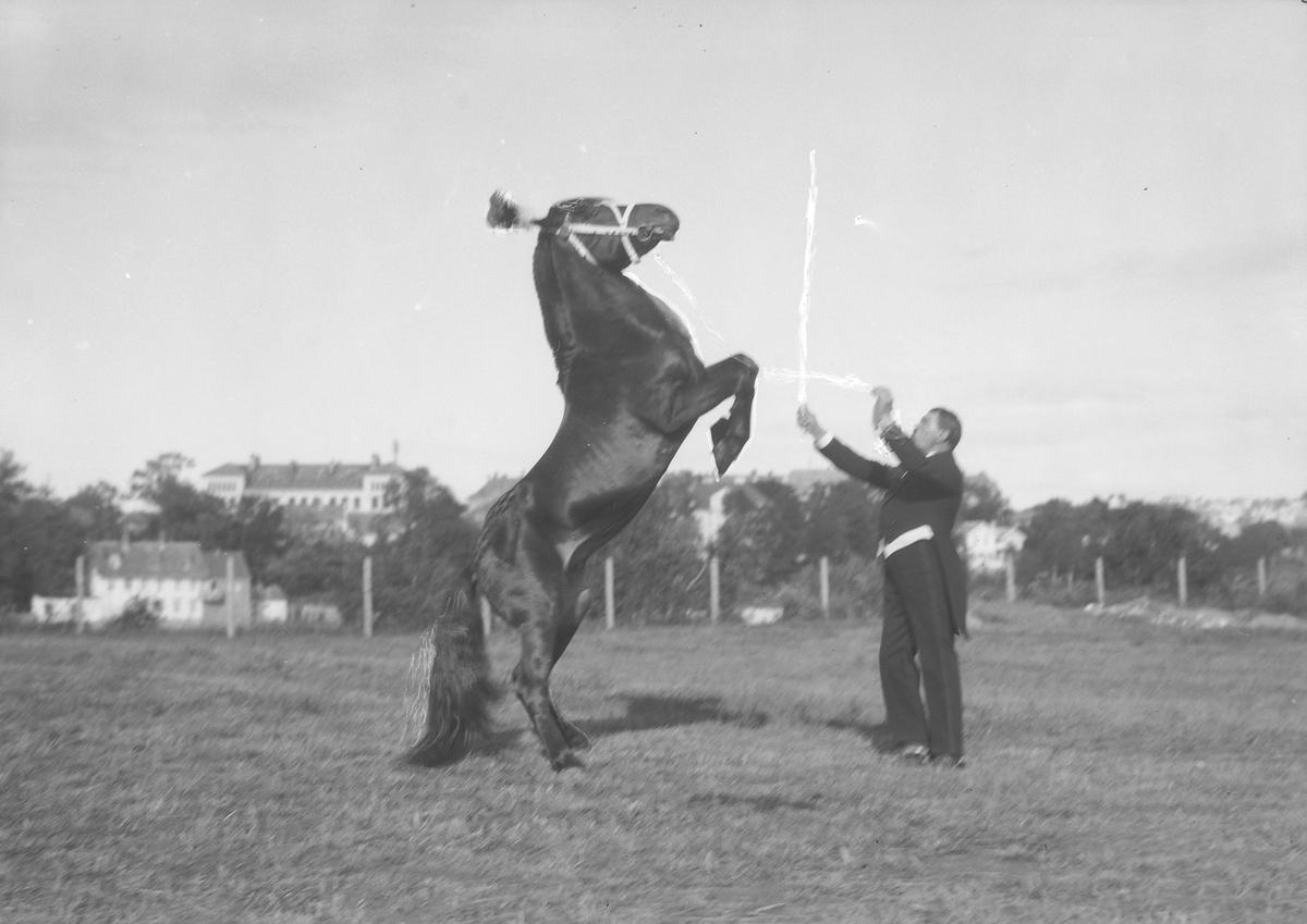 Direktør Leth Carstensen i Circus Globus dresserer en sirkushest. Fotografering 1927 ca. Fotograf: Schrøder