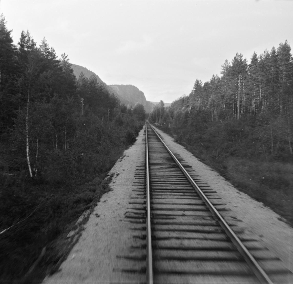 Parti fra Treungenbanen, fotografert fra førerrommet på motorvognen til Treungen.