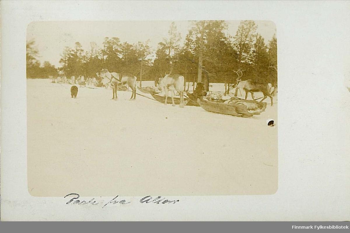 Postkort med motiv av reinsdyr og sleder i Alta. Kortet er en jule- og nyttårshilsen til Arthur og Kirsten Buck. Kortet er sendt 23. desember 1910.