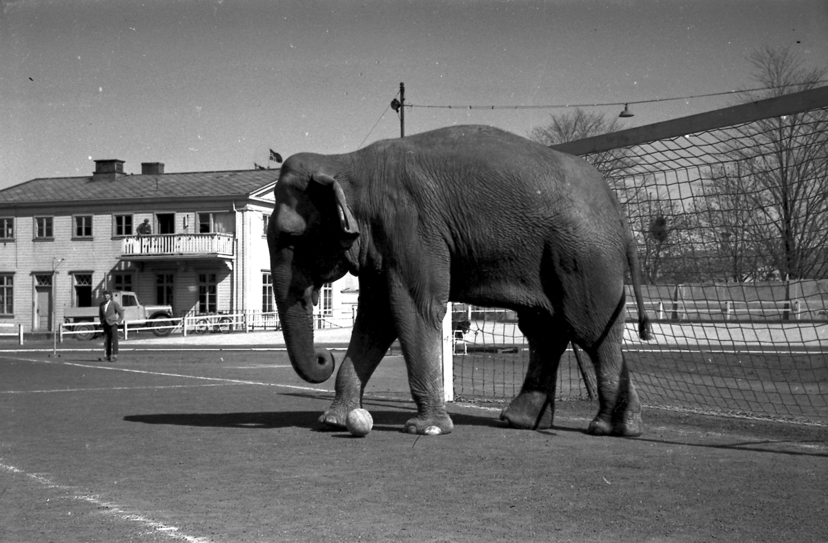 Circus Arnardo trener på Stadion