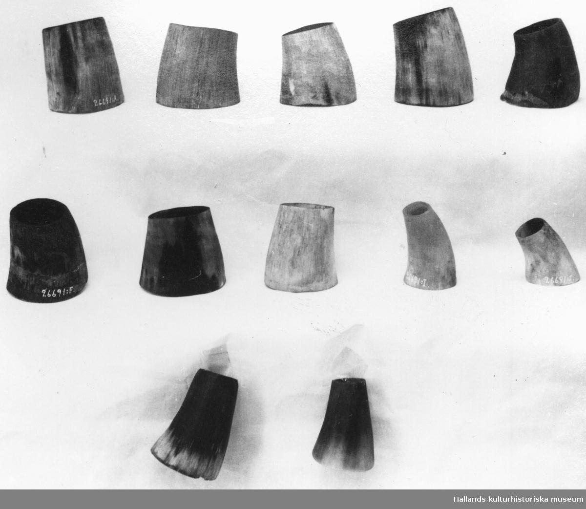 Fjälsterhorn. 12 stycken gul-svarta kohorn till korvstoppning. Längd 5 - 8 cm.