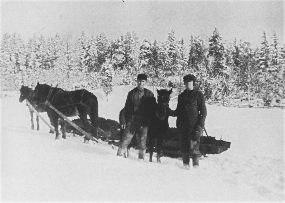 Utkjøring av gjødsel. Oscar og Jens Børresen med to hester.