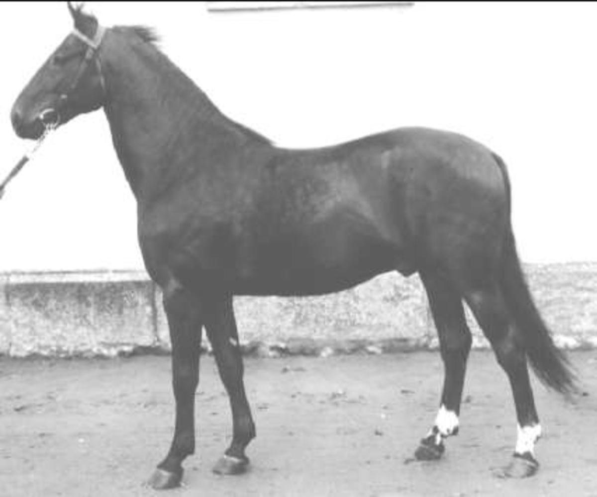 Ulster-Algy-Fia, uppfödare Fr. Billing, Hjällö.