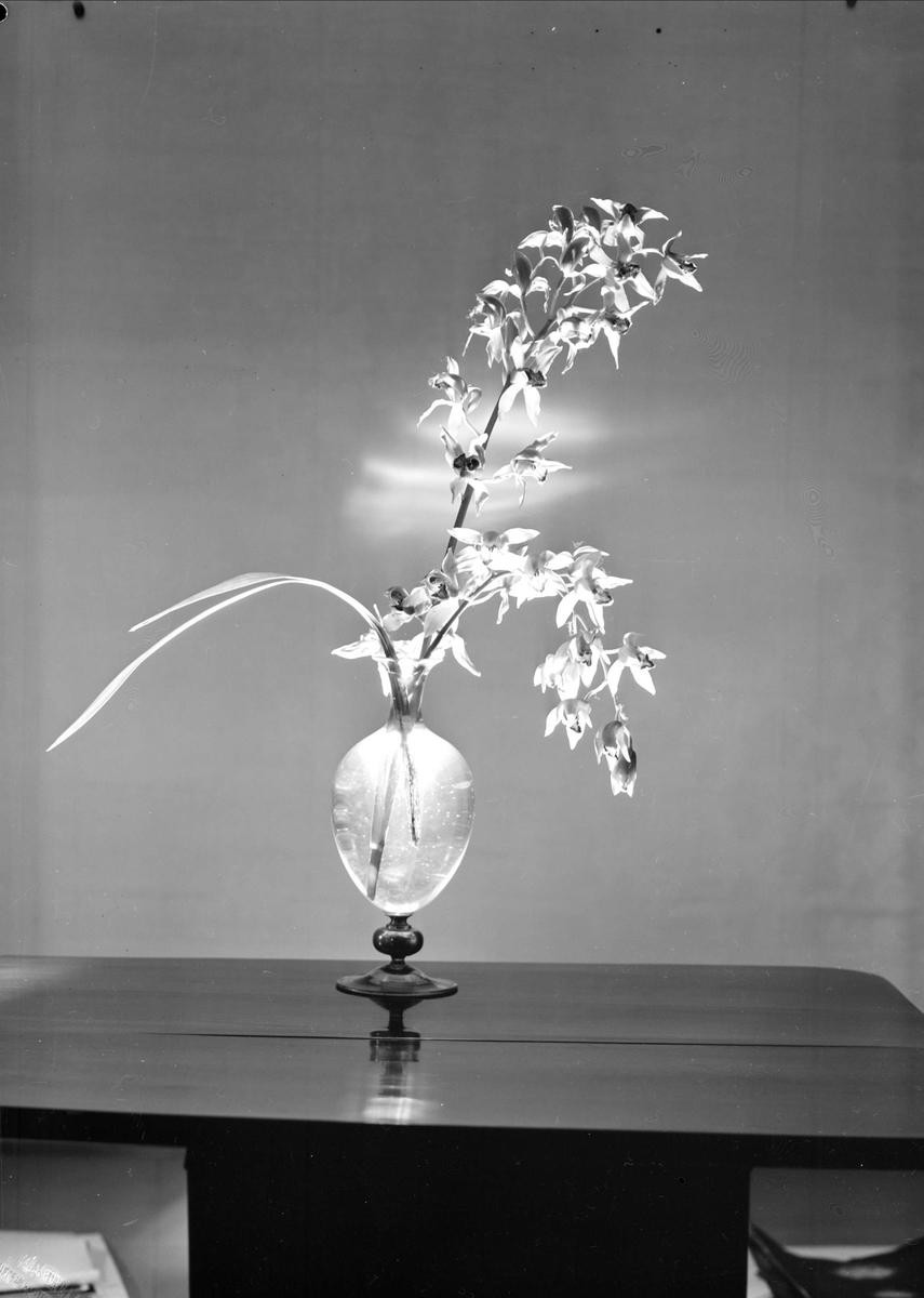 Orkidéer i vas