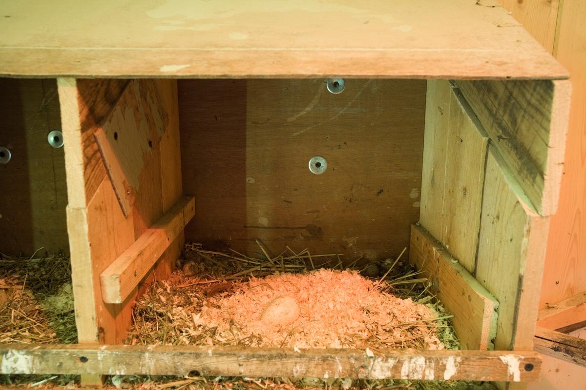Hønserede med egg i hønsehus