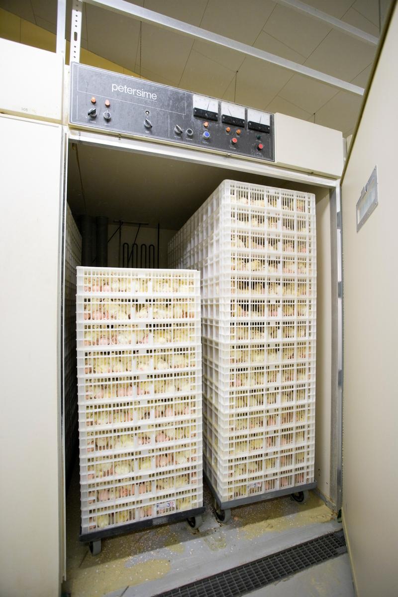 Varmeskap til klekking av hønseegg i klekkeri.   Eggene klekkes inne i skapene, der luften er varm og regulert. Dørene holdes lukket mens klekkingen av eggene foregår