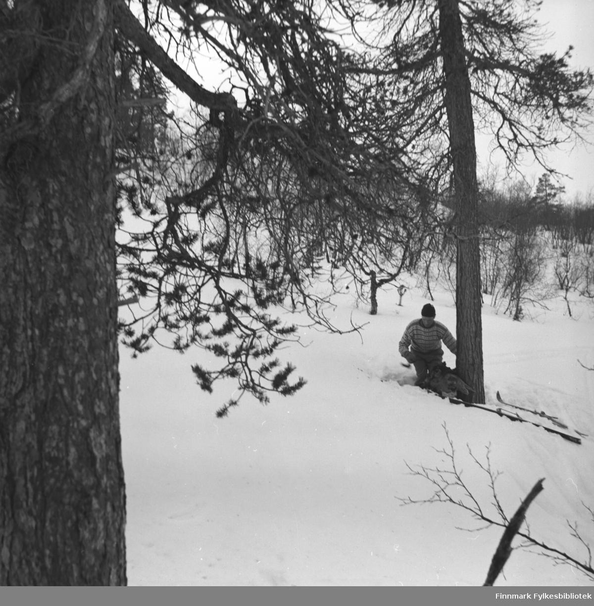 Eino Drannem på skitur i skogen nær Karasjok.