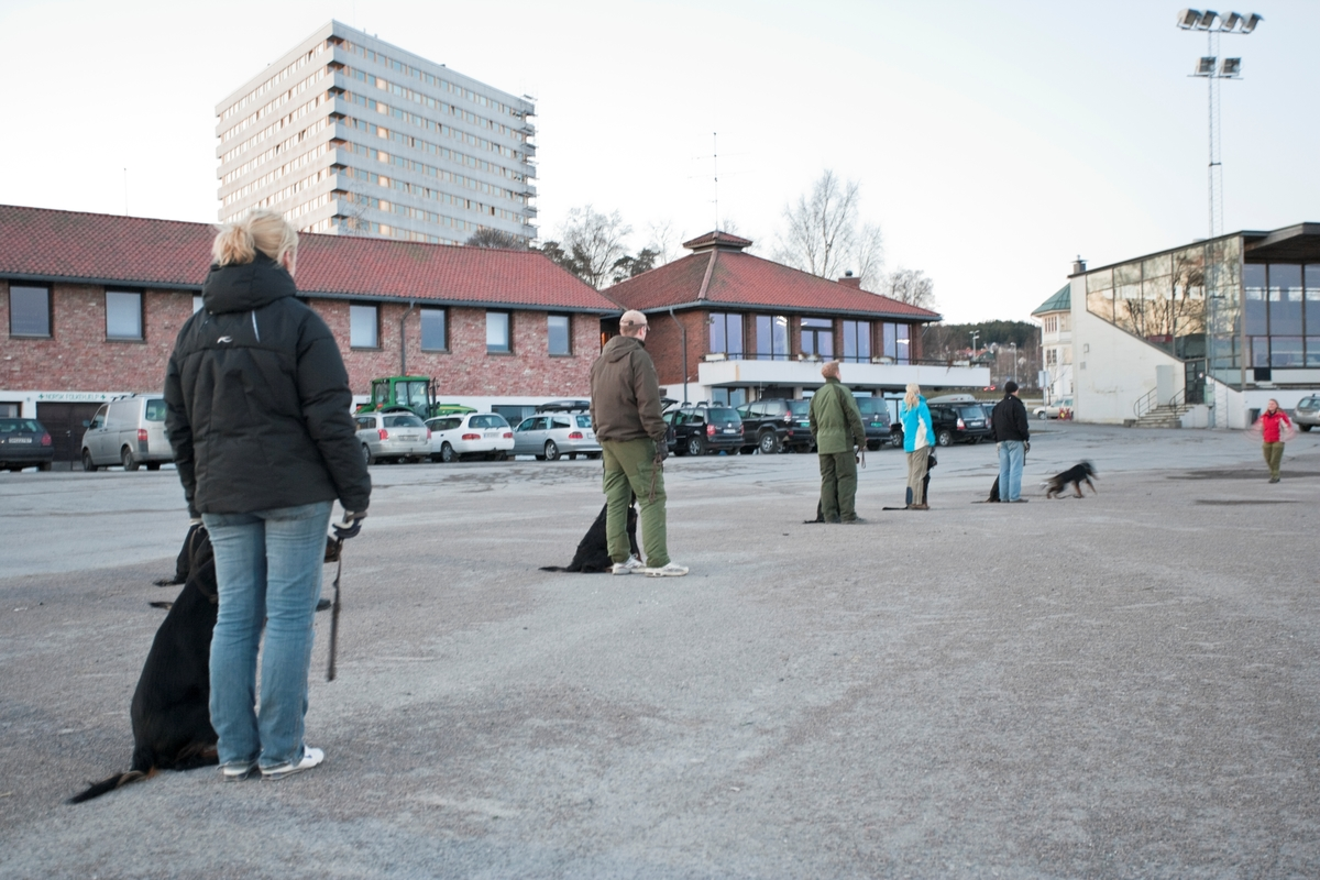 Dressurkurs for hund. Hundeeiere og hunder i rekke på kurs.