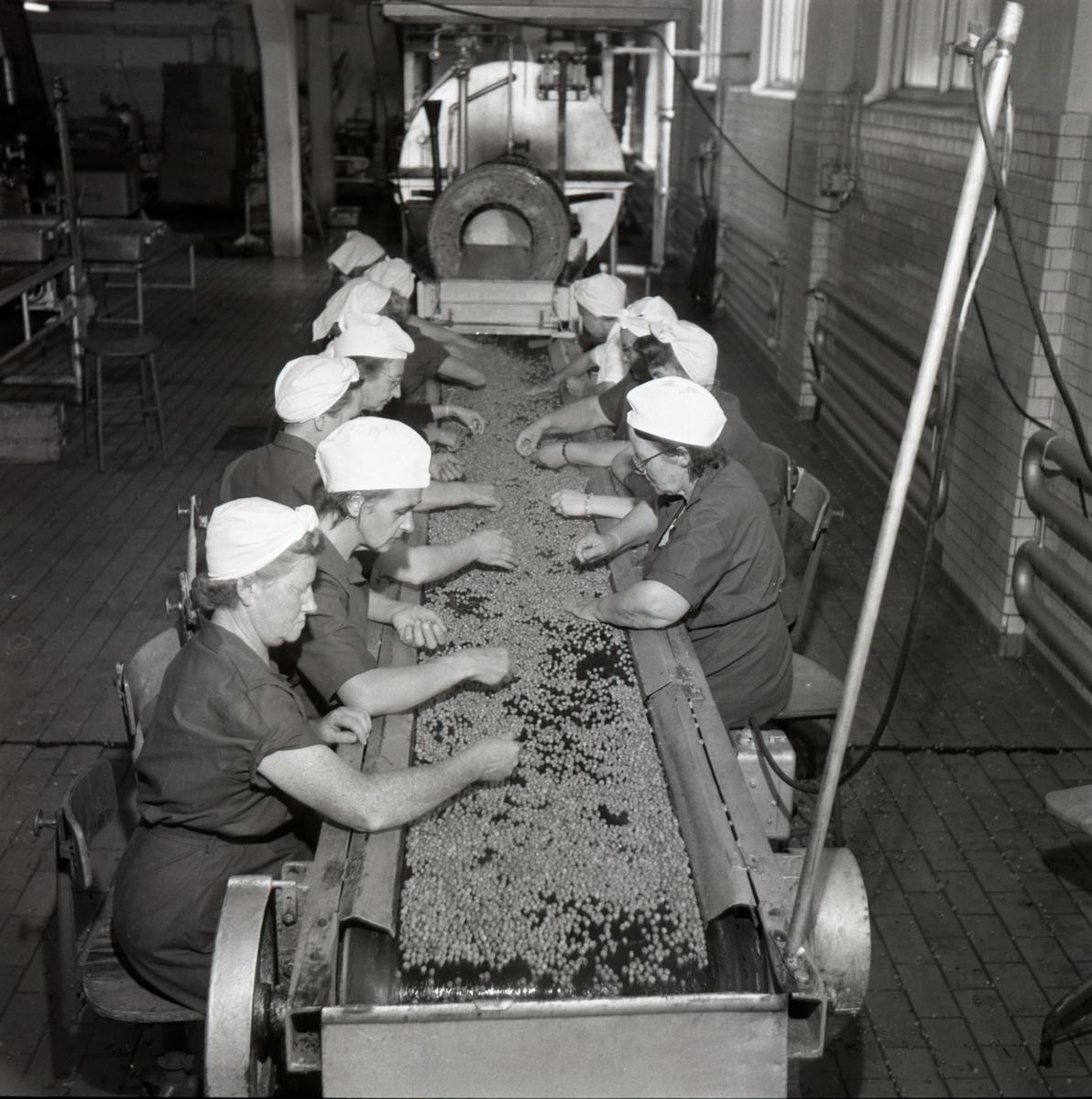 Interiör av Sirius konservfabrik vid Nykvarn. Fabrikschef var John Jolbäck.Fabriken konserverade ärtor i första hand. Flera kvinnor sitter vid ett löpande band och sorterar ärtor. Merparten av de anställda var kvinnor. Företaget avflyttades från Linköping 1954.
