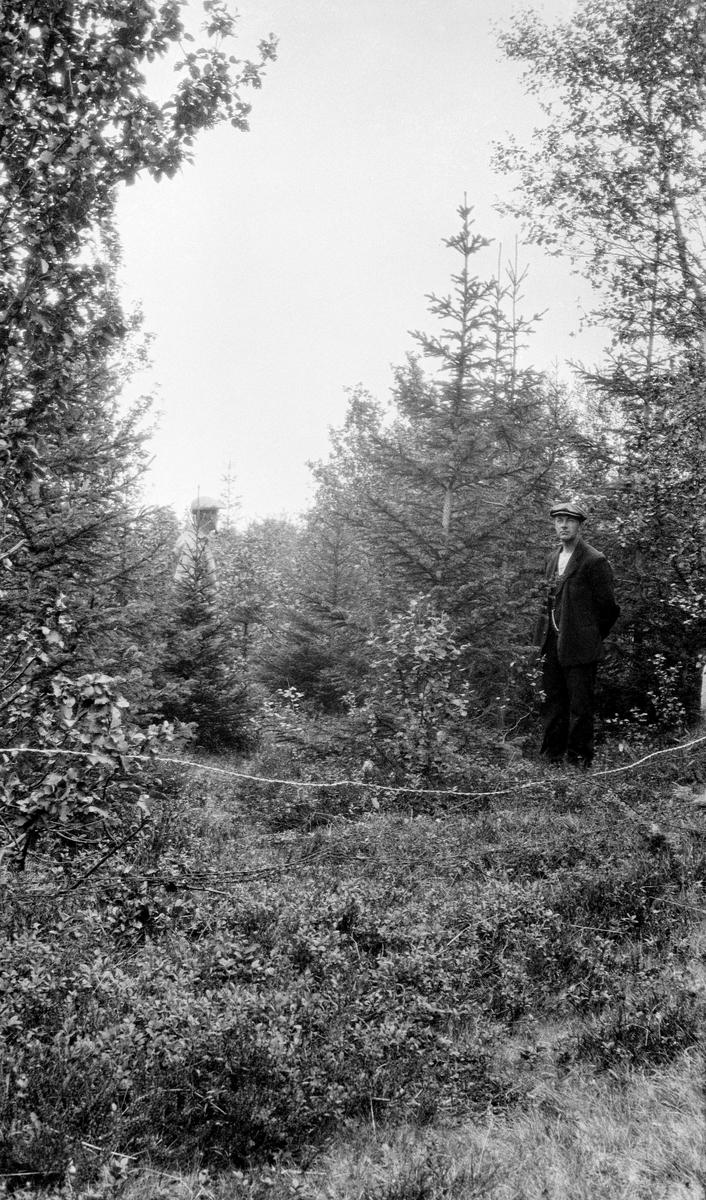 To menn, antakelig skogfunksjonærer, fotografert i et ungt plantefelt, Bjarkøy i Troms i 1931.  Seksten år før dette fotografiet ble tatt hadde skogforvalter Agnar Barth skrevet at «Furuen er fortiden, granen er fremtiden og Tromsø amt [Troms fylke] er granens fremtidsland.» Mange av Barths forstmannskollegaer sluttet seg til denne visjonen, men botanikeren Hanna Resvoll-Holmsen mante til forsiktighet. Hun påpekte at man ennå ikke visste om granforekomstene i Norge var innvandringshistorisk betinget - om dette treslaget rykket fram mot nye områder - eller om datidas utbredelse for dette treslaget var klimabetinget. Hanna Resvoll-Holmsen tvilte på om det ville være mulig å produsere kvalitetsvirke av gran i Troms.