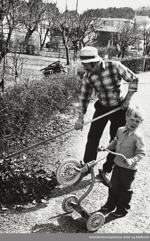 Etterstad Kolonihage. Egil Meyer i gang med våronna og Rune Lagtvet med trehjulssykkel. Mai 1975