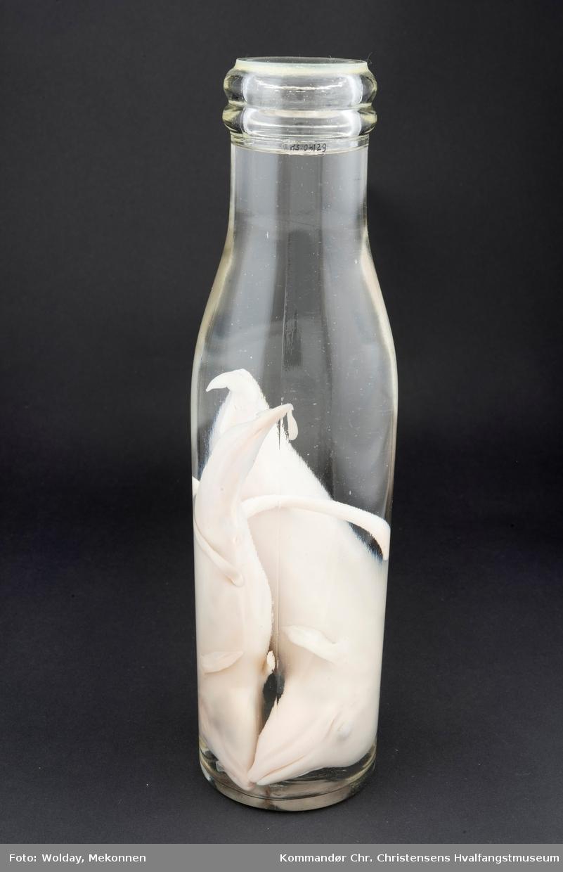 2 hvalfostre på flaske med konserveringsvæske.