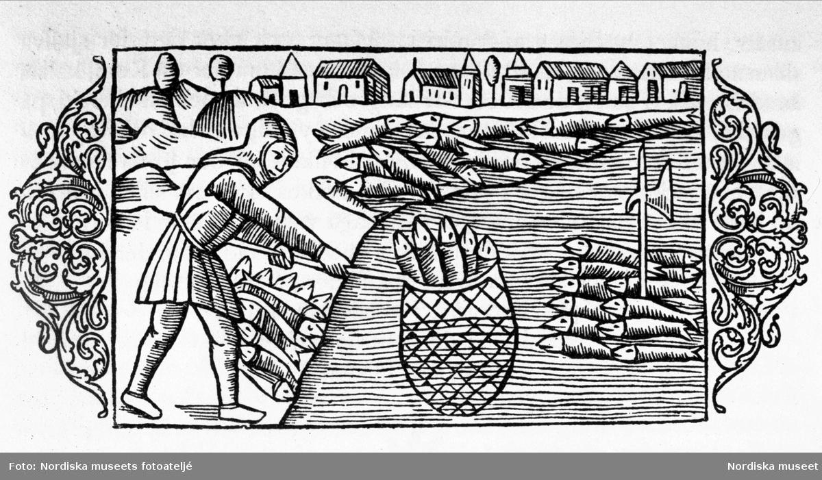 """Fiskare med håv. Vinjett ur """"De Nordiska folkens historia"""" av Olaus Magnus, kap. 28"""