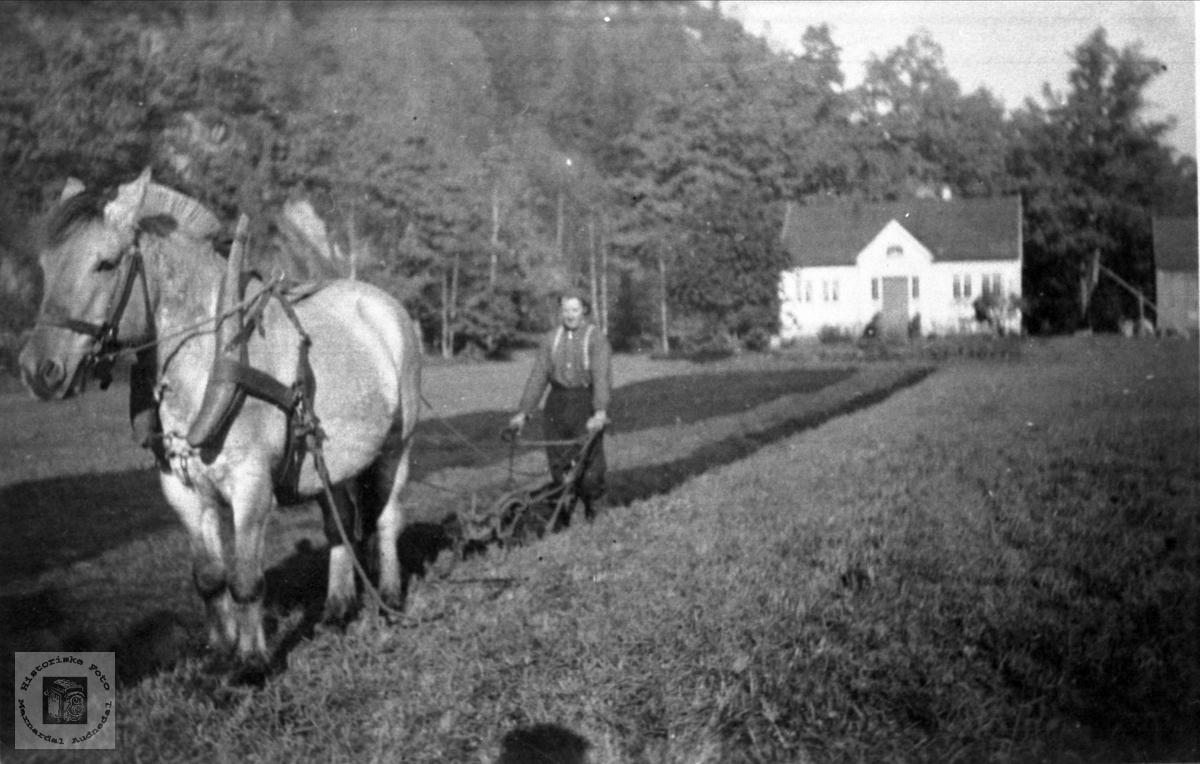 Hestepløying på Lille-Strædet i Finsland senere Marnardal.
