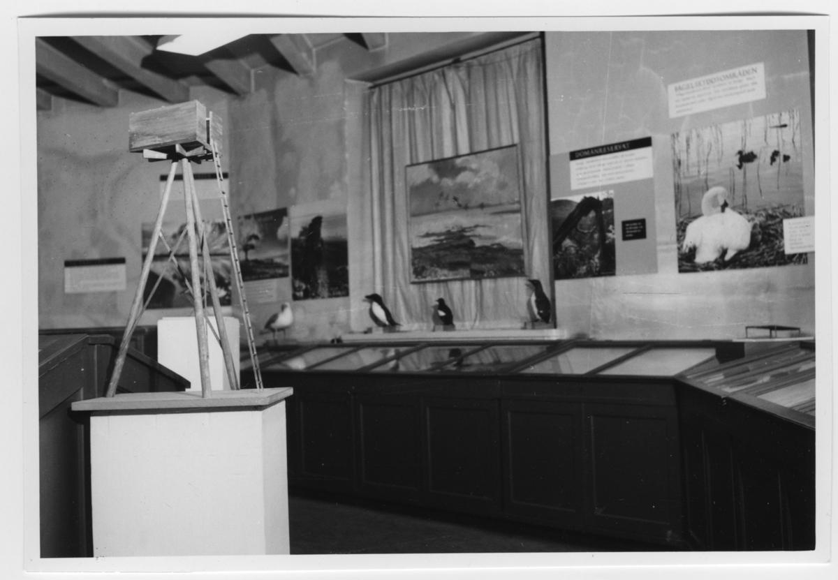 'Modell av jakttorn eller utsiktstorn? Byggd i trä. Längs väggen låga trämontrar med glaslock. Monterade fåglar ovanpå och på väggen tavla och bilder med fågelmotiv. ::  :: Ingår i serie med fotonr. 6983:1-22.'