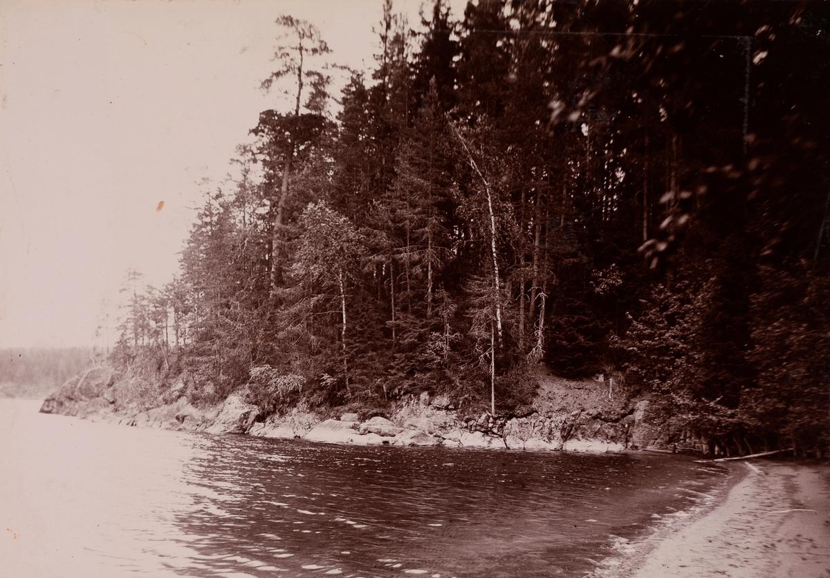 En innsjø i skogen.