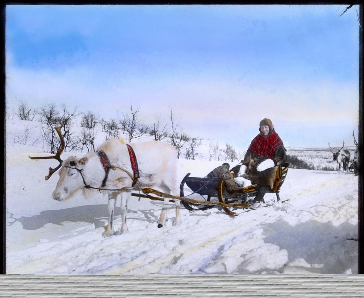 """""""No.432. Fin... ...oter Karen Var.."""" står det på glassnegativet. Teksten er litt utydelig, etternavnet kan være Vare eller Vara, Nare eller Van. Fin kan bety Finn, som nordmenn kalte samer på den tiden - eller det kan henspeile på Finnmark (Finmark). Portrett av samisk kvinne,  Karen V. eller N. ...sittende i slede med kjørerein. Vinterføre og sol. Karen er kledd i skinnlue, samisk pesk og vintersjal. Hun har reinsdyr skaller på beina. Sleden er trukket av en kjørerein i vinterpels. Reinen har bare et horn, det andre er felt. Bildet er håndkolorert av Schrøder."""