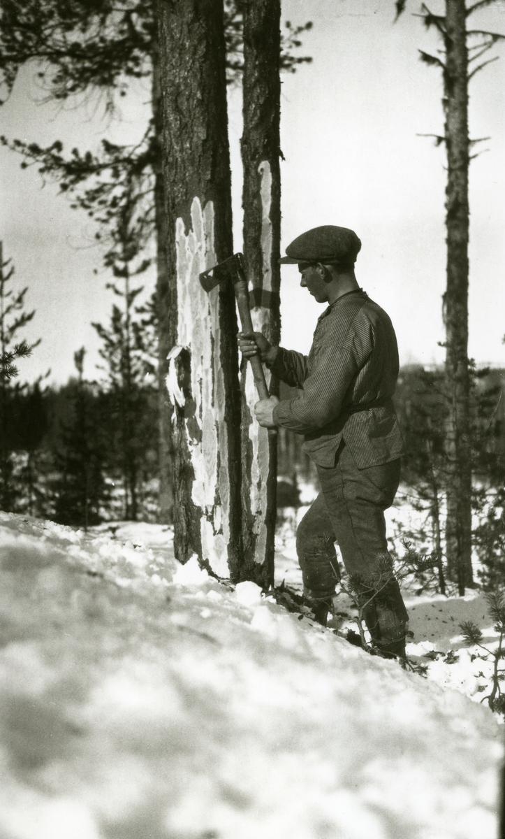 "Skogsarbeider i full sving med øksa (""merkjing""). Snø. Alfred Hansen (1901)"