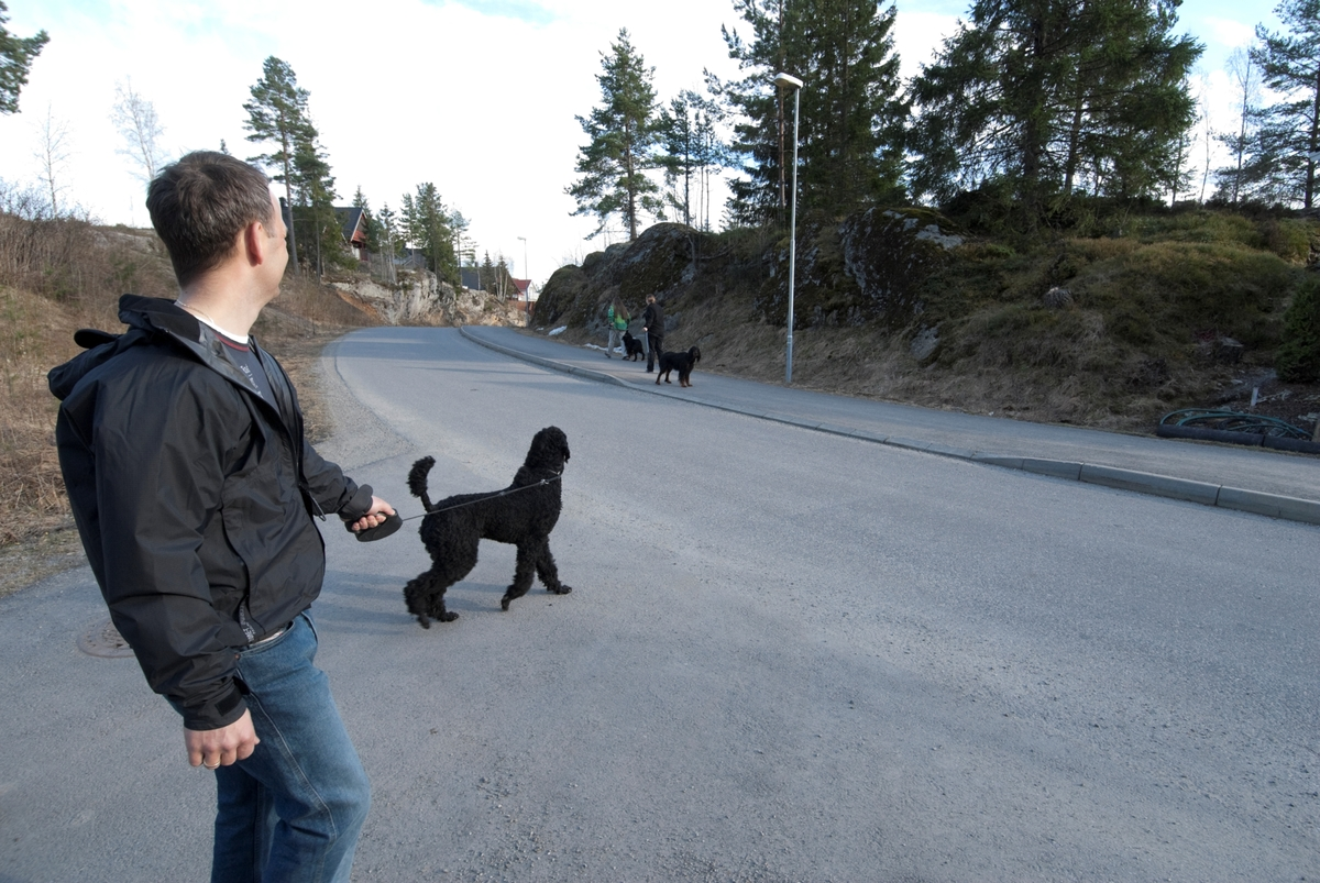 Hunden Pedro på tur med sin eier ser en annen hund på den andre siden av veien.