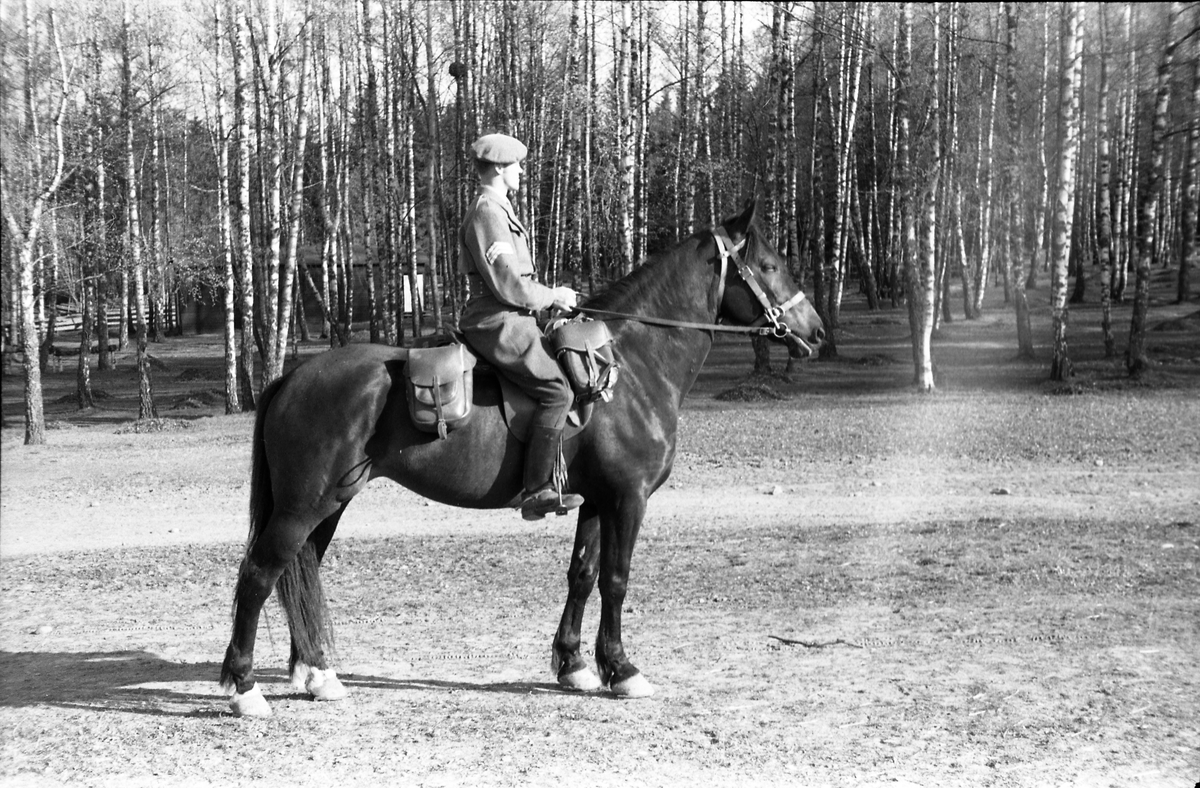 Fem bilder av en uidentifisert militær rytter med sersjants grad ved Hærens Hestskole på Starum mai 1953.