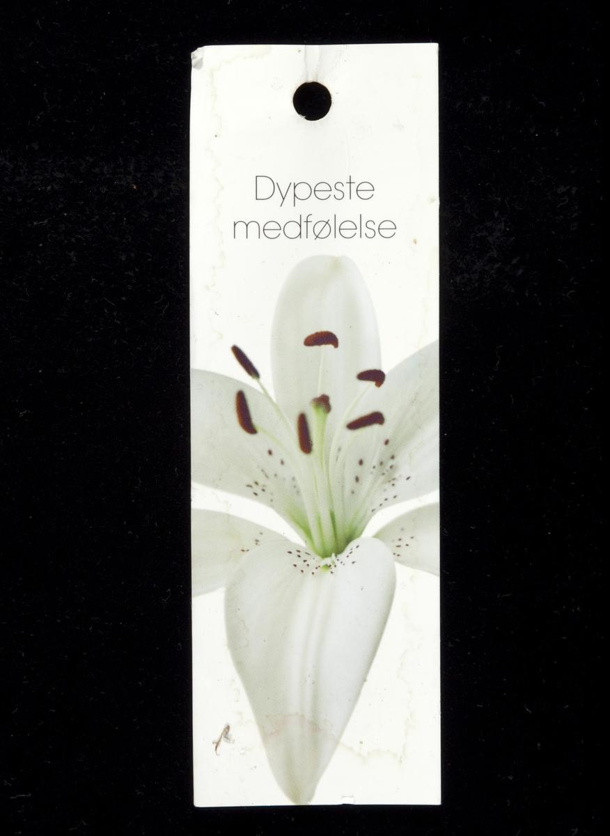 En hvit lilje.