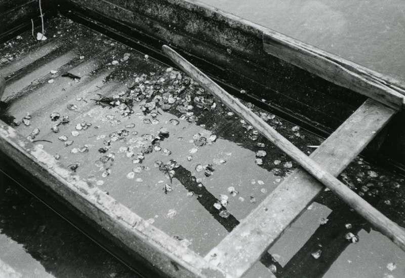 Båt med østers