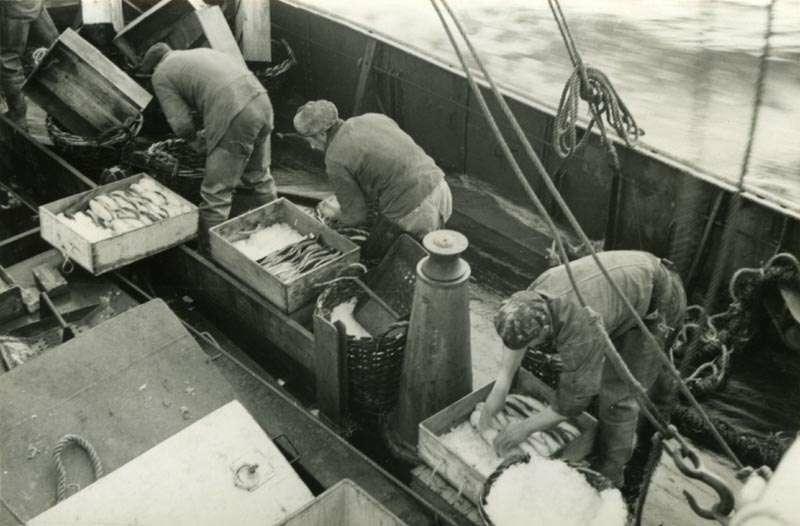 Arbeid med fangst på dekk