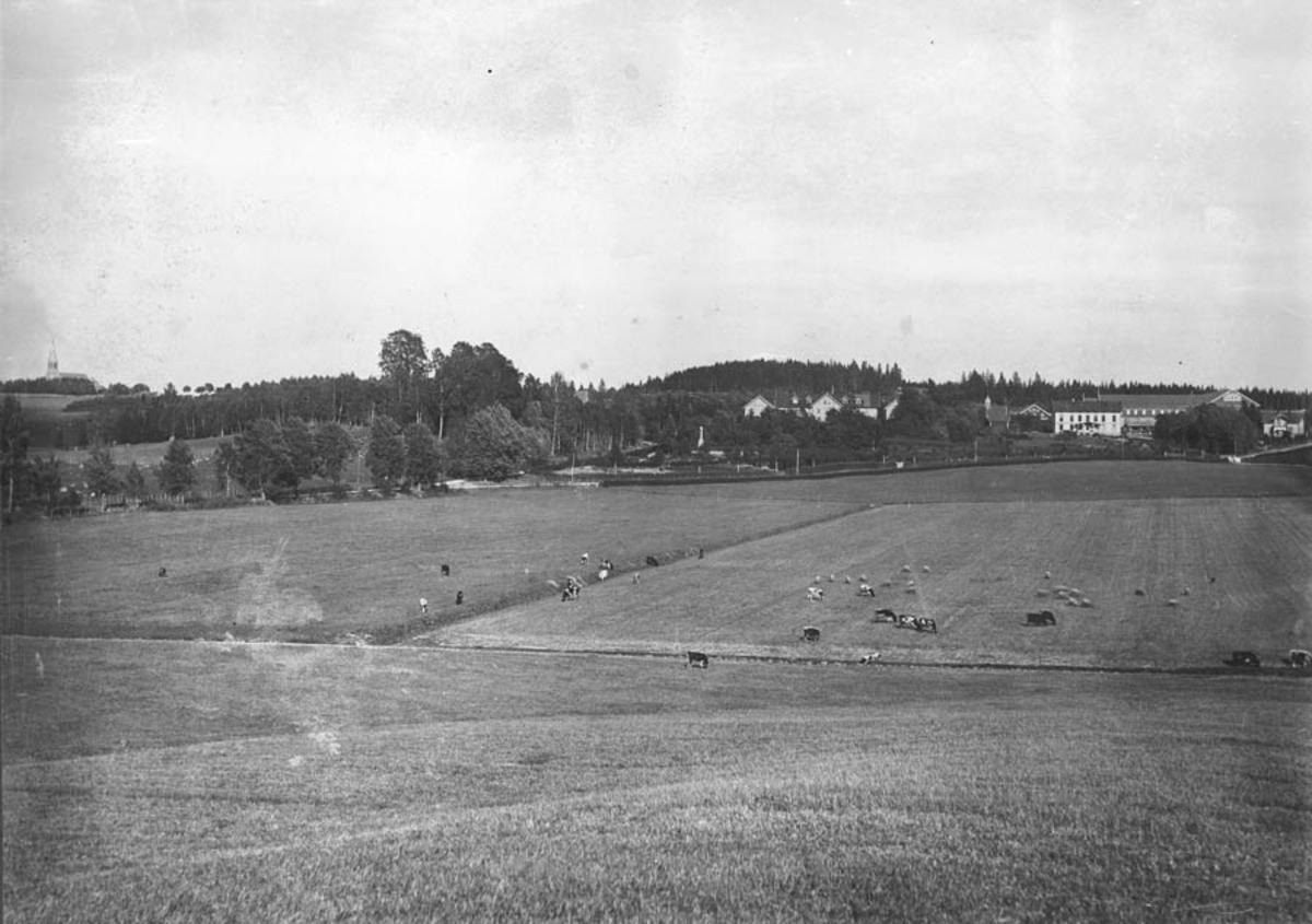 Jordbrukslandskap med dyr på beite ved Norges Landbrukshøyskole.