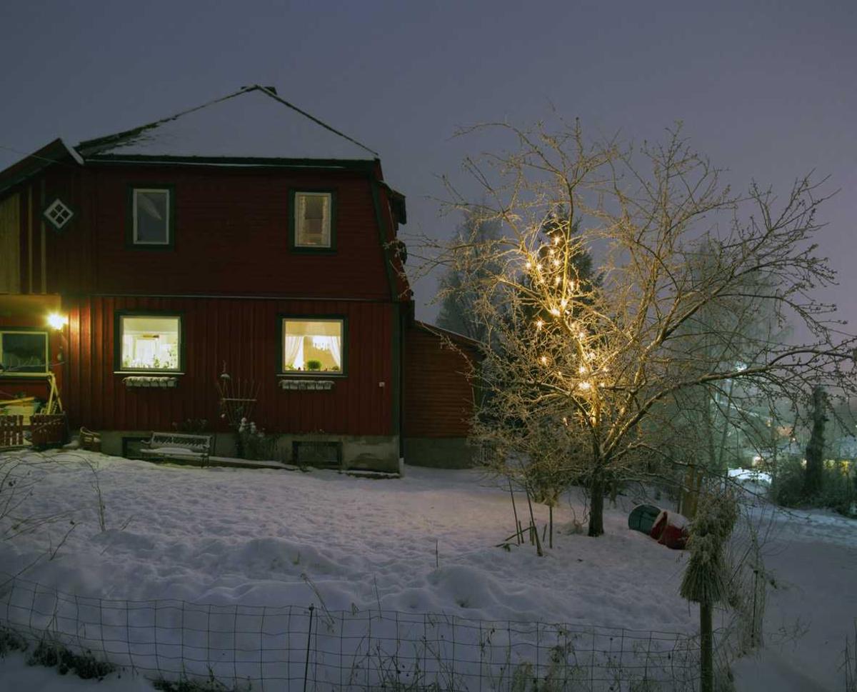 Julebelysning  Hvit julebelysning på løvtre ved enebolig