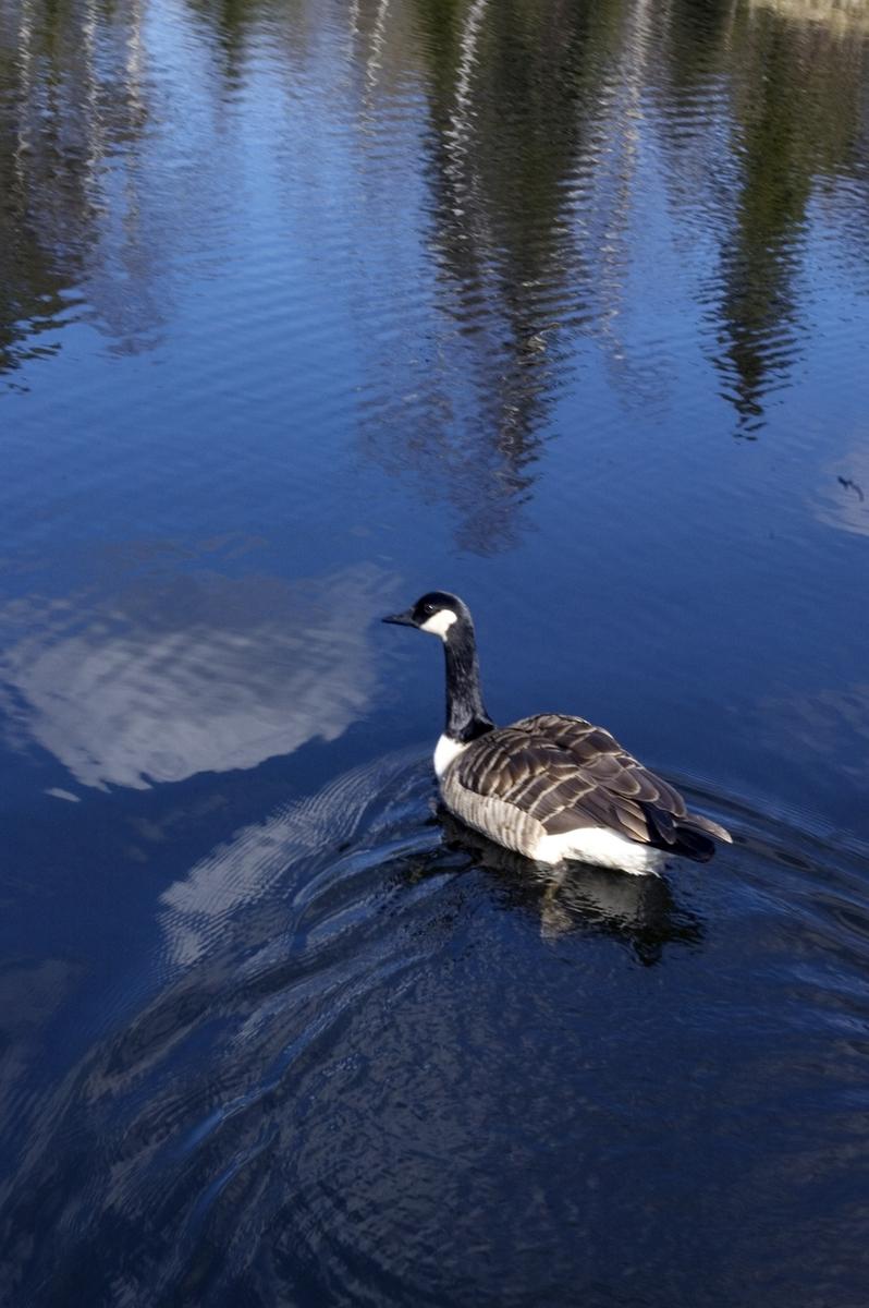 Vann - fra fotoutstillingen VANN 2010