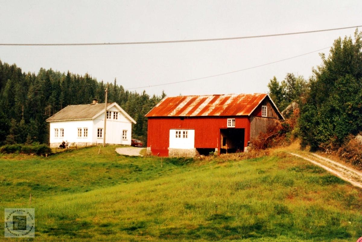Garden Ringækrå på Leland i Selandsdalen i Grindheim.
