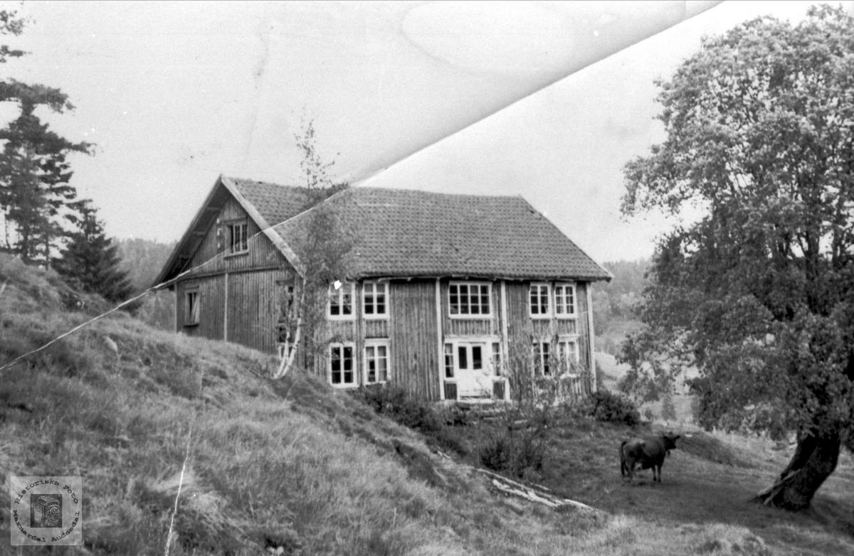 Haugland i Bjelland.