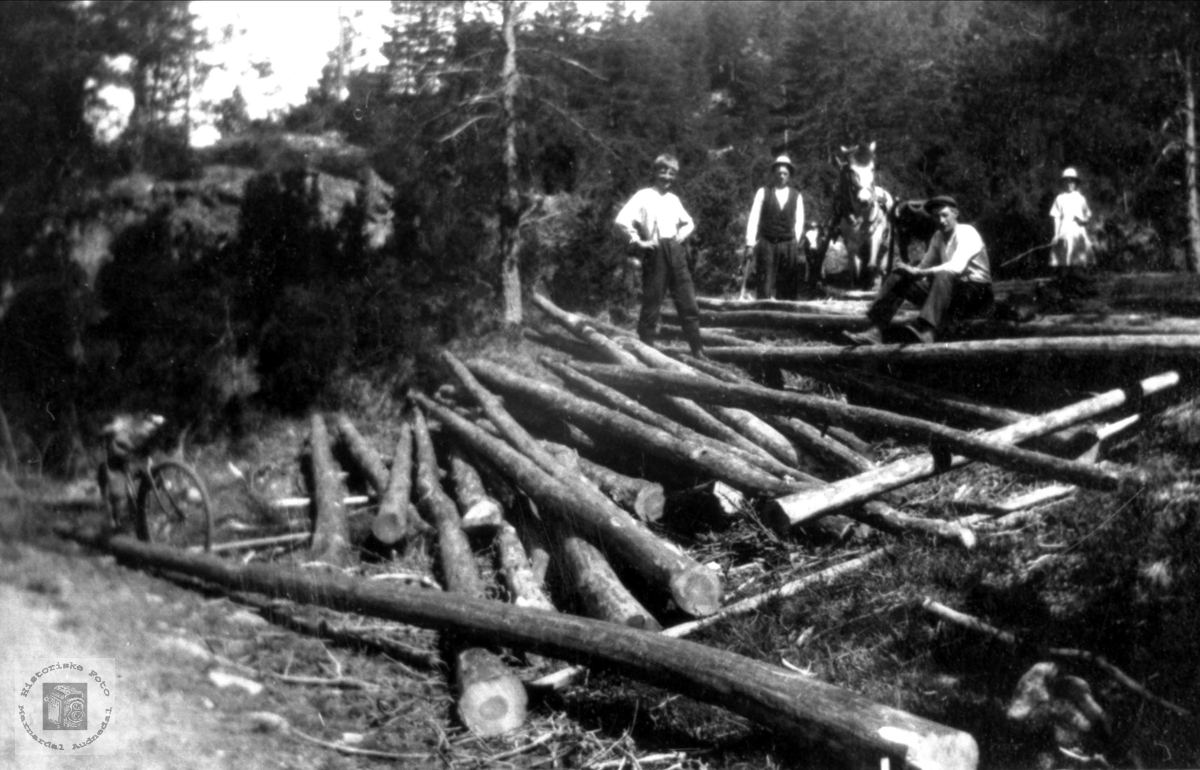 Tømmerhogst i Hasseldal Høye skog Øyslebø.