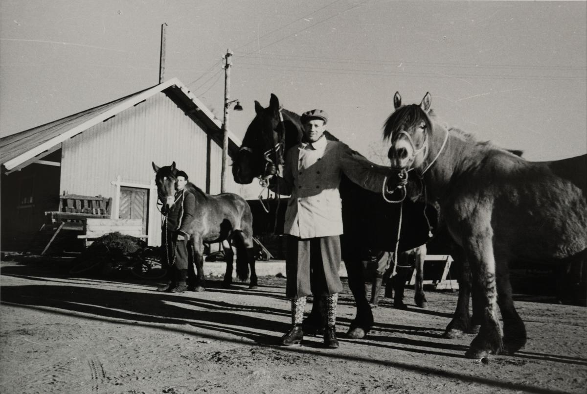 Lokal beboer viser frem hestene sine til fotografen.  Pakkhus Løken i bakgrunnen.